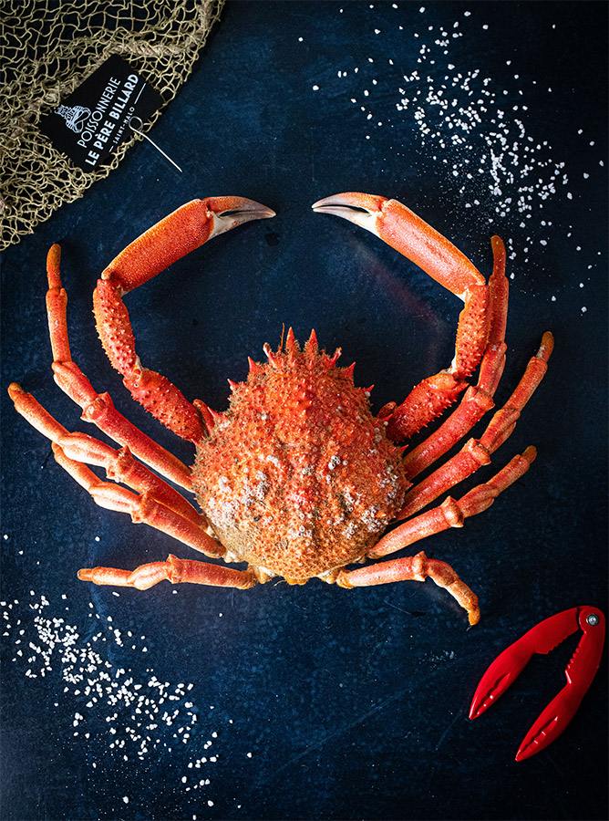 Araignée de mer, crustacés à Saint-Malo et Dol-de-Bretagne